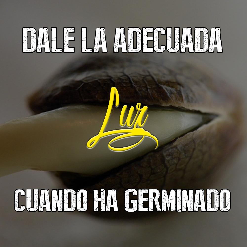 16 Luz